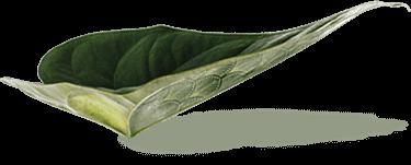 Le végétal a du style